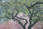 5_tree_spring_outline