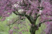 Garbarini 1 _Tree Spring
